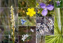 Wildflowers of Lake Weyba's wallum / Sharing the kaleidescope of colour that is springtime in the wonderful wallum.