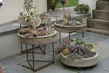 Gardening - ghovece plate suculente