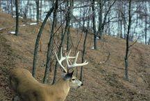 Hunting / by Scott Frein