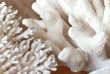 Beach coral / by Terri Garcia