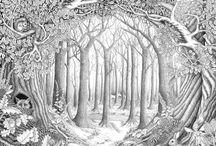 merveilleuse forêt