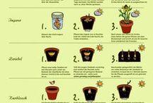 pflanzenvermährung