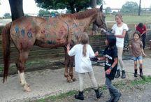 Equestrian - Pony Club