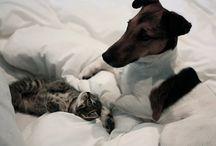Pets / Our pets