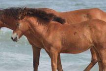 Homeschool - Horses