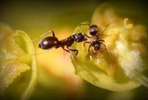 ANTS!!!!!!