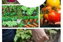 gardens veg