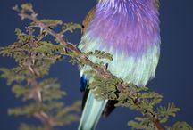 birds / by Nena Derbedrossian