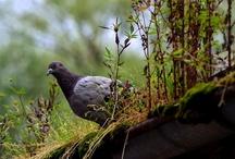 Birds / by As En