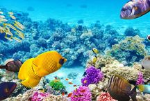 Top snorkelling spots in Australia / Check out our favourite snorkeling spots here in Australia.