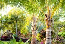 Tropical plant ideas