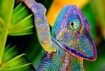 Chameleon world