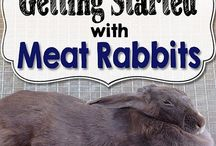 Meat Rabbit
