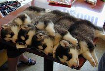 Puppy Luv!!!