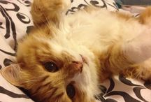 My cat, Garfield