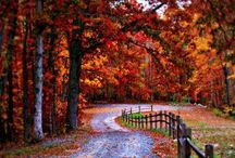 Autumn/Fall shades