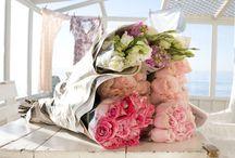 petals / by September Avenue