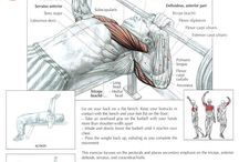 Gym Routine / Push and pull exercises.  / by David Heflin