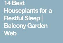 Better Sleep Quality Plants