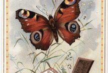 Butterfly / Motyle