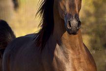 My horses -