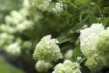 Composizioni floreali e fiori