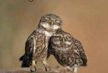 Owls / All things owls