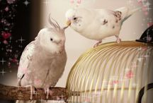 My birds / Photos of my lovely budgie Birdie and cockatiels Sunny and Pearly / by Lilith Moon