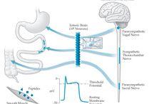 Nervou System