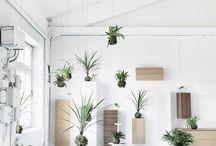 GREENSTYLING lovedbystijlburospot / Plants and flowers