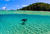 Amazing Photos / The best photos that you can possibly find please. Let`s make this a great board. Just photos please no quotes or marketing images ~Yoriko / by Dr Yoriko Todd