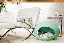 Cat home / Cat home
