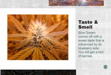 Quick Strain Reviews / #1 Place to Quickly Learn About Weed on the Web