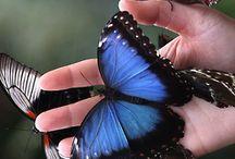 Butterflies 1.
