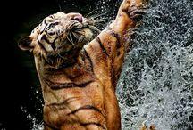 beauty wild cats