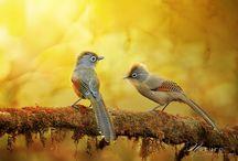 Orange - Encourages socialization / ..so we love it! :) / by One Social Media LLC