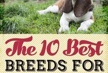 Pets / Pets and Pet supplies