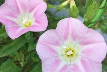 꽃 / 일상에서 쉽게 보는 꽃
