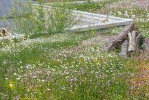 Slivenec stresni zahrada