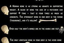 bone info