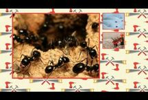 Fort Worth Pest Control / There are different types of control of insects measures that may be adopted. Browse this site http://www.fortworth.pestservicenetwork.com/ for more information on Fort Worth Pest Control. There are both organic methods of Fort Worth Pest Control as well as the ones that use chemicals which are available in both gel as well as spray form.