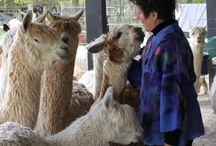 Nuno Felt Alpaca Clothing / Nuno felted with my own Suri alpaca.  All of the designs are one of a kind, hand dyed alpaca.