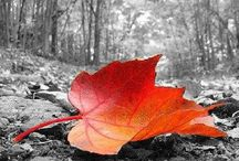 "Autumn - Fall - Halloween / October gave a party; The leaves by hundreds came - The Chestnuts, Oaks, and Maples, And leaves of every name. The Sunshine spread a carpet, And everything was grand, Miss Weather led the dancing, Professor Wind the band. ~George Cooper, ""October's Party"" / by Pascale De Groof"