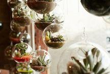 インテリア 植物