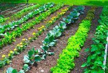 Farm and garden.