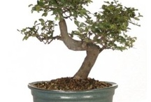 bonsai / by Cristiana Guffanti