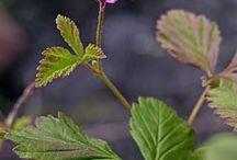 Kasveja luonnossa