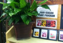 Four Seasons Plant Program / A great gift idea to help acknowledge your love and appreciation year-round to the special people in your life. Pick the months of your choice and receive corresponding gift certificates for live plants that can be redeemed throughout the year at our garden center.