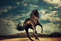 """Courage / The Lord spoke to Job and said, """"...Do you give the horse its strength or clothe its neck with a flowing mane? Do you make it leap like a locust, striking terror with its proud snorting? It paws fiercely, rejoicing in its strength, and charges into the fray."""" Job 39:19-21. A symbol of strength and courage, the horse reminds us of God's great power and might."""