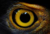 teste dos olhos